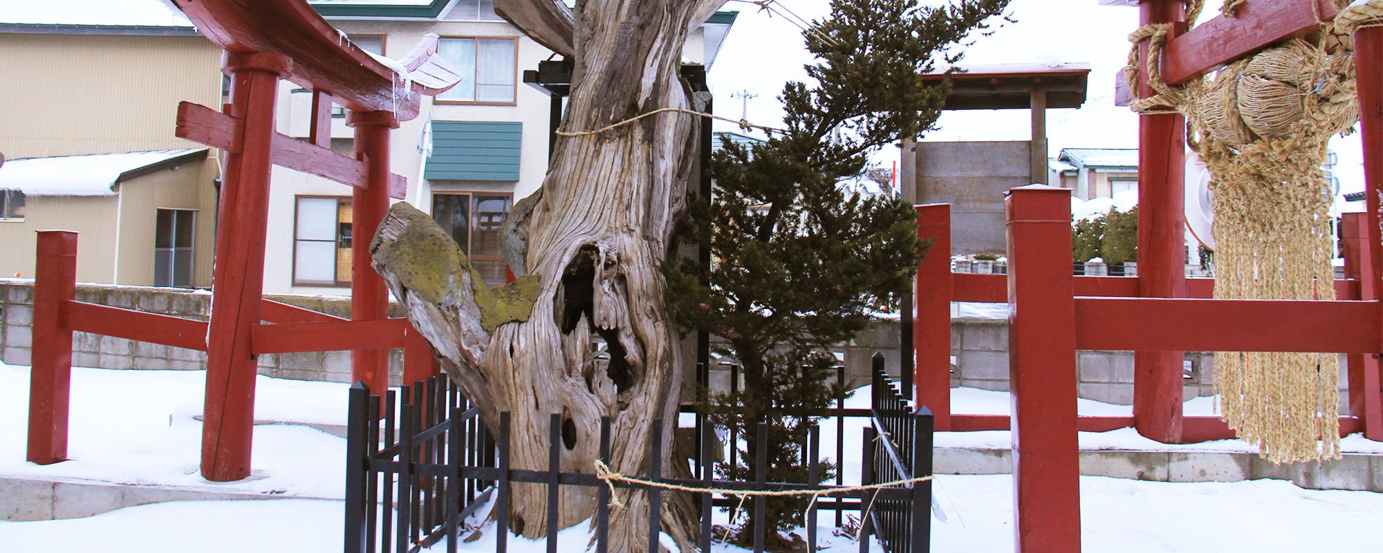 徳下いちいの木