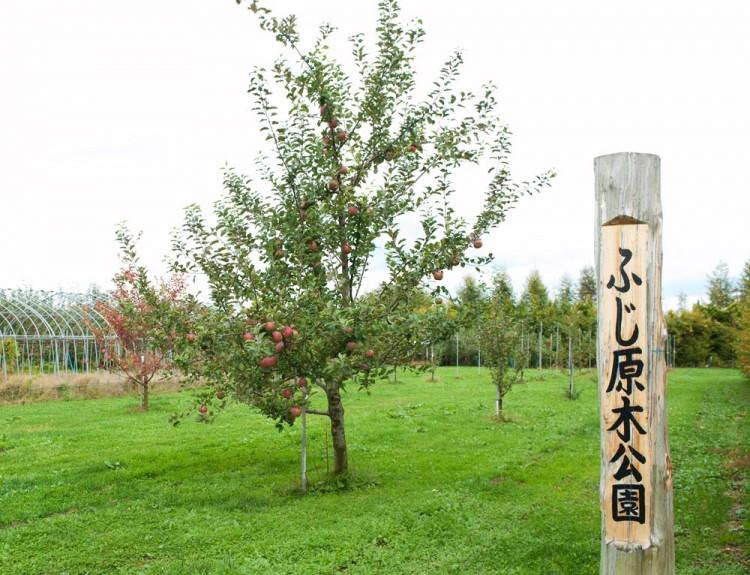 藤崎町ふじ原木公園