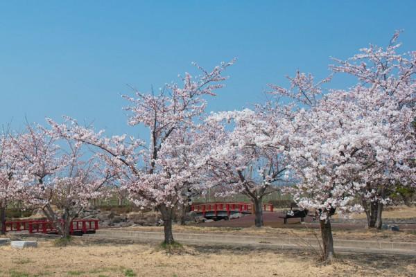 唐糸御前史跡公園の春
