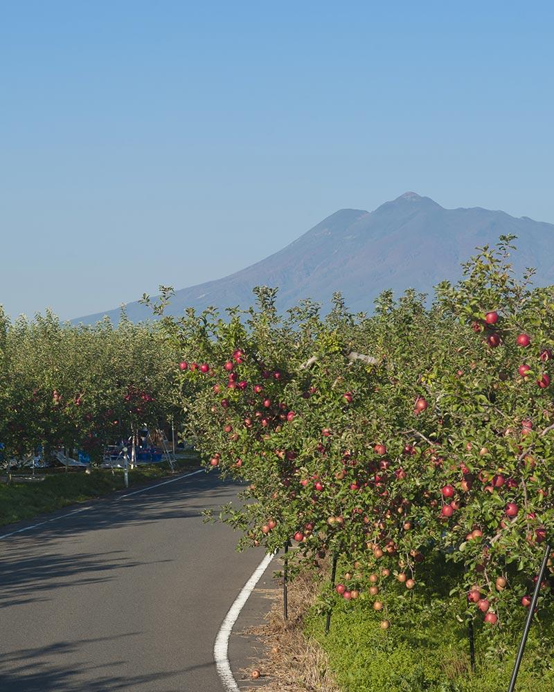 道路沿いのりんごの木
